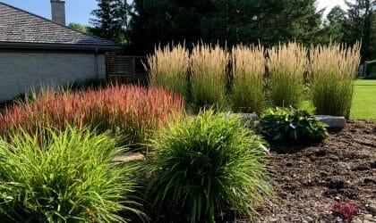 Garden Care Lonond, Ontario - SimpliScapes