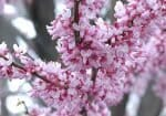 12 Best Trees To Plant In Southwestern Ontario